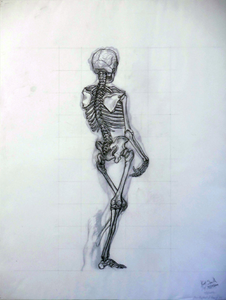 posterior skeleton study david michelangelo raphael graphite drawing